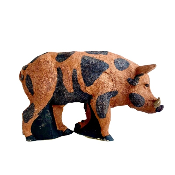 Feral Boar Spotted 1